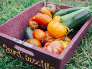 Les légumes bio de Jardin Insolite à Saulgé.